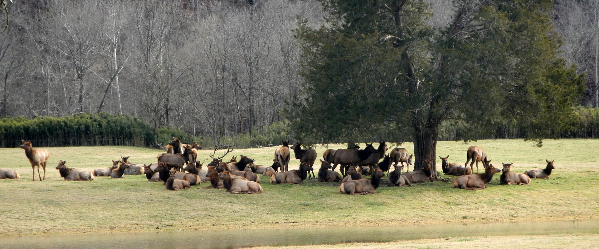 Elk viewing in the Upper Buffalo River